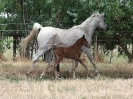 Undurra Simone and her 2017 filly by Simeon Shatah