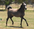 Undurra Jack a gelding who likes to please